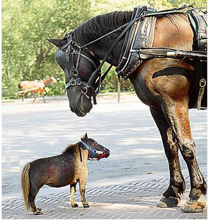 worlds-smallest-horse.png