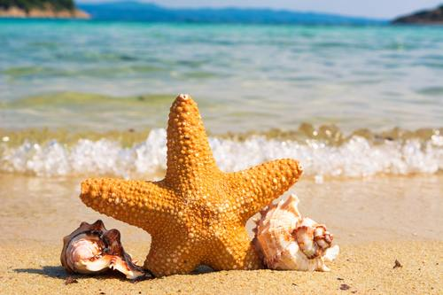 a-starfish.jpg